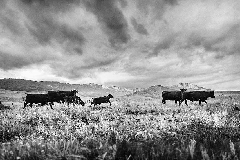 Mill Creek Ranch -- Gunnison, Colorado