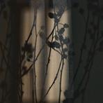 Stille Bilder 11