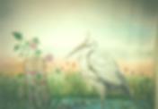 stork-446x310_edited.png