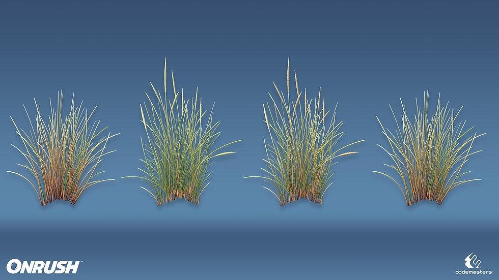 GrassMarram_01.jpg