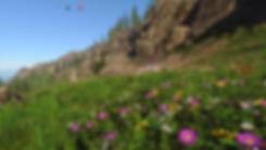 FlowersMixed_03.png