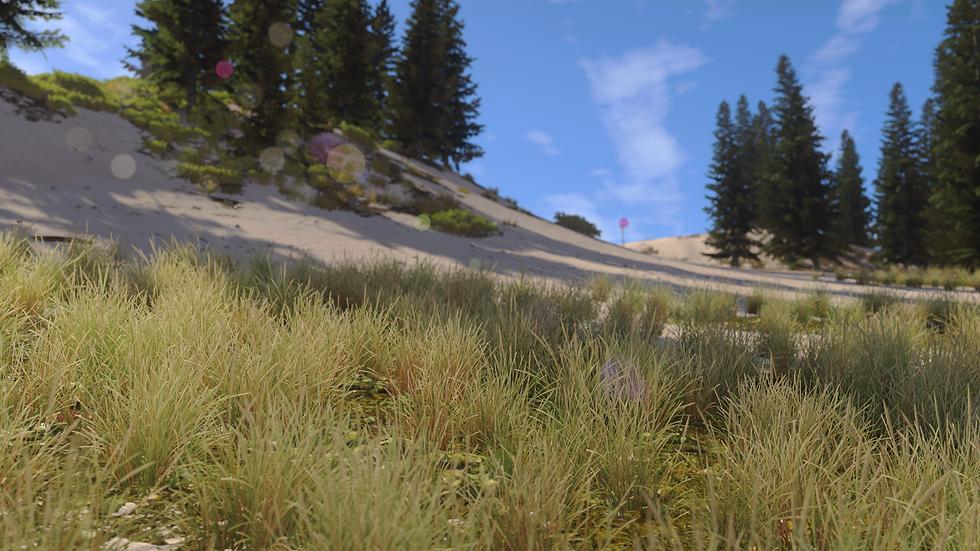 GrassMarram_03.png