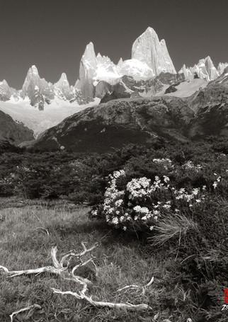 El Chalten and Wildflowers