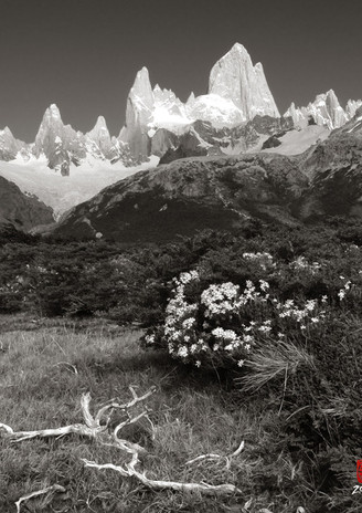 El Chalten and Wildflowers
