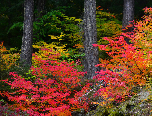 Cascade Colors