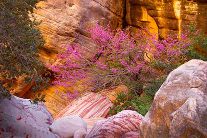 Spring Bloom in the Canyon