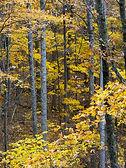 autumn hardwood 3 web.jpeg