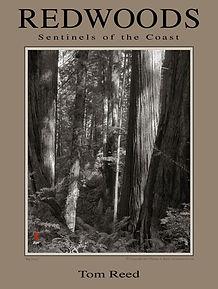 redwoodposter4web.jpg