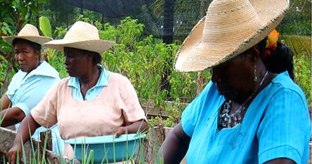 cultivo-en-azoteas-pacifico (1).png
