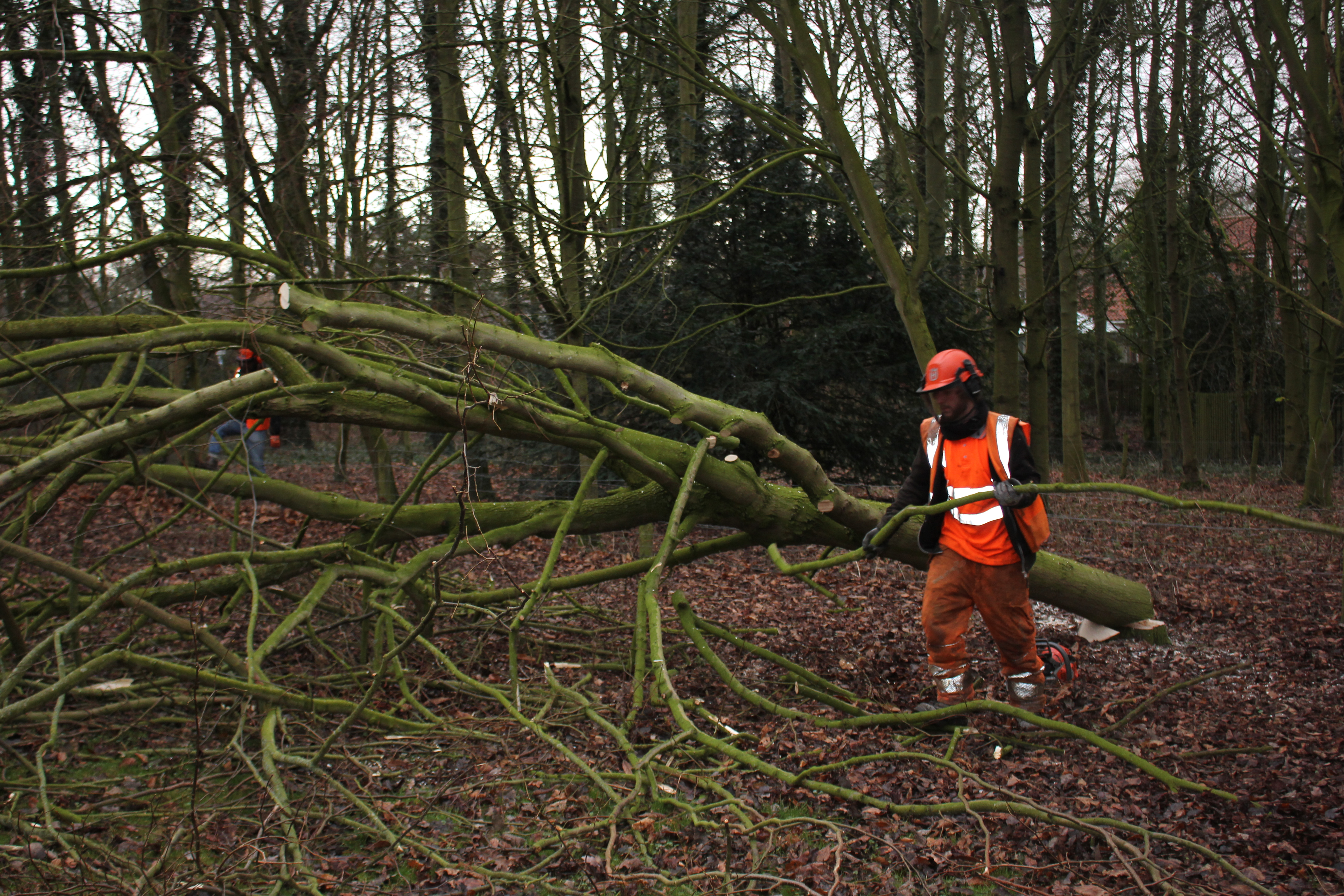 Specialist Tree Felling