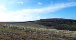New trees for Bardon Hill