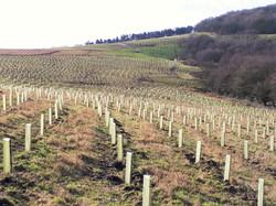 Bardon Hill Quarry Landscaping