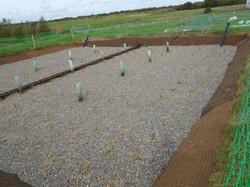 Killingley - Reed Beds