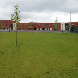 Grassed area with  new trees