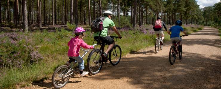 Dalby Forest Paving