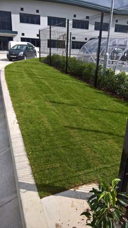 New turf for Plot 16