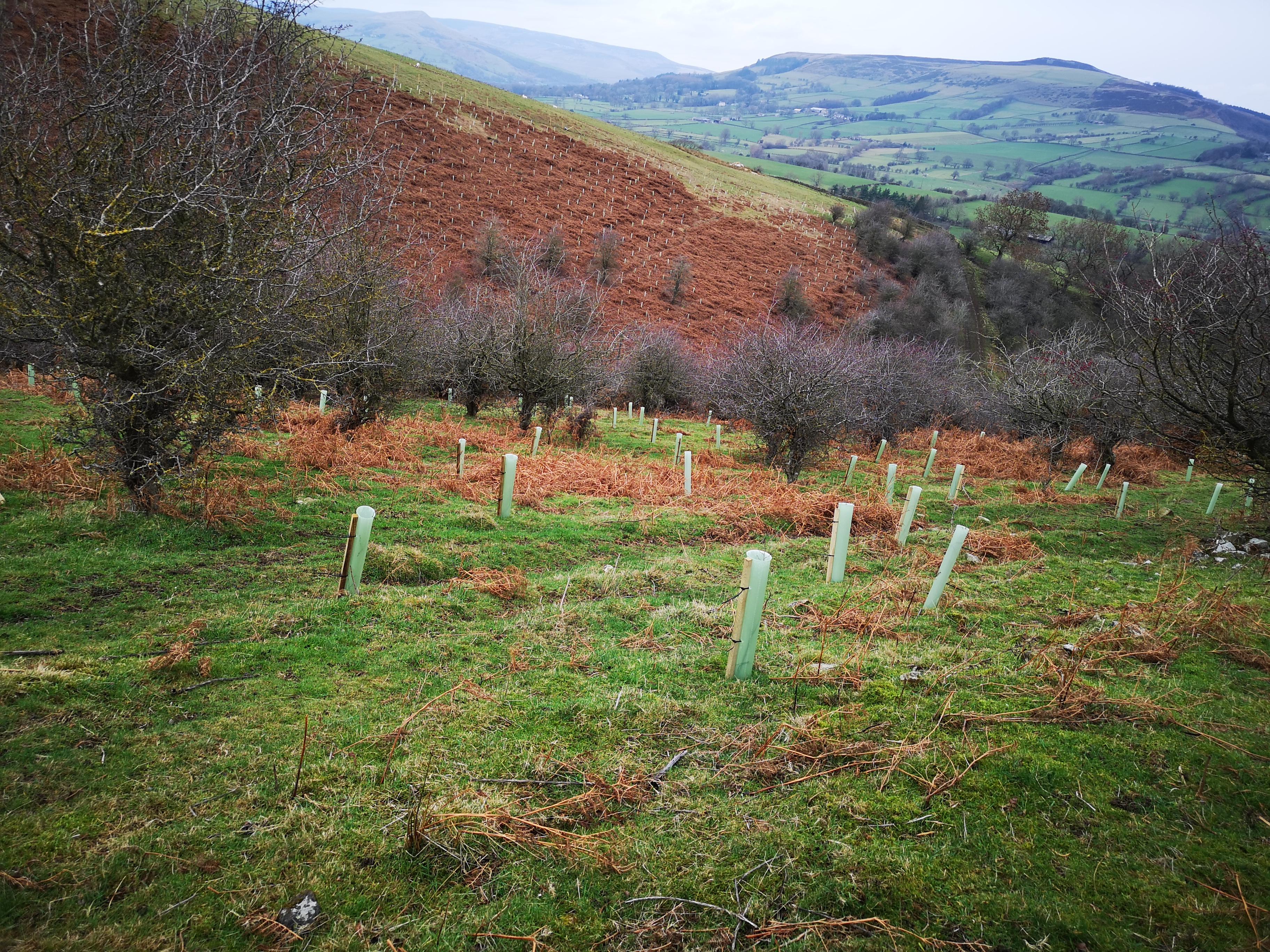 Shatton Clough Woodland