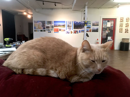 naturewashere gallery cat