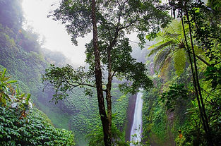 rainforest alliance trees nature leaves water