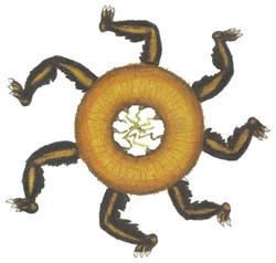 Donut Spider
