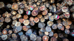 When is Timber the Right Investment