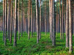 timber005