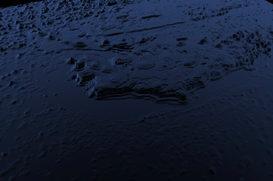 galap sea floor.jpg