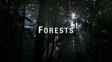 Forests title_fadevrsn.jpeg