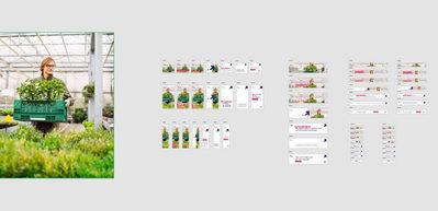 Plants-display2.JPG