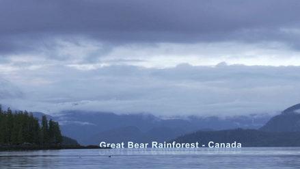 Great Bear Rainforest, Canada_SR.jpeg
