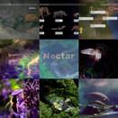 _Nectar9_animals.mp4