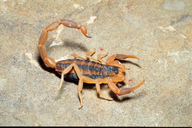 scorpion 4.jpg