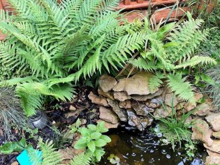 Building A Small Garden Pond
