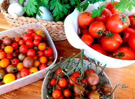 Tomatoes, Tomatoes and More Tomatoes