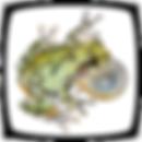SSAR logo-color-bg=w (1).png