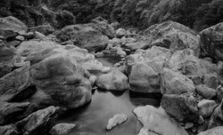 仁淀川に合流する上八川川。