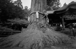 富士吉田 浅間神社