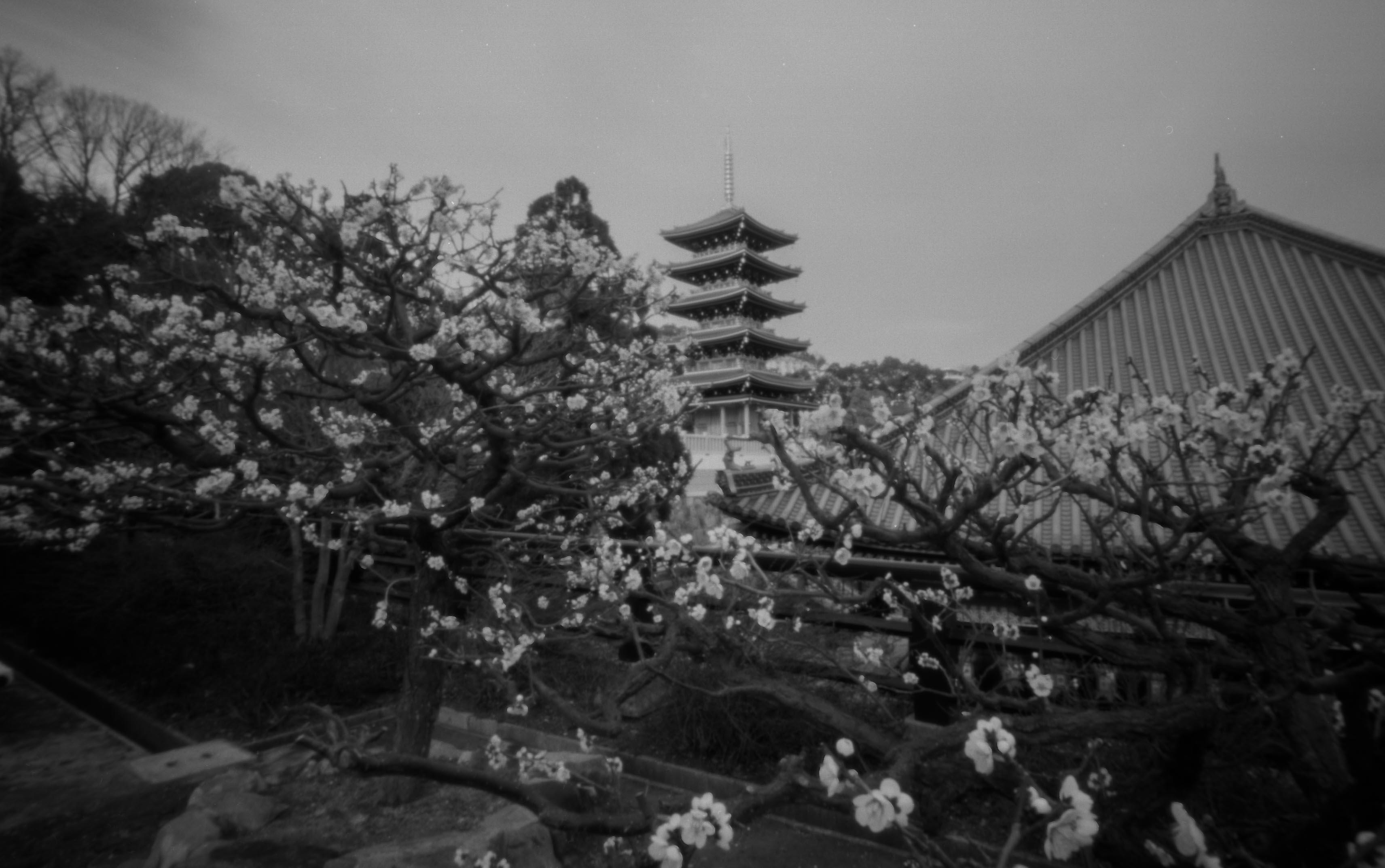 宝塚 中山寺