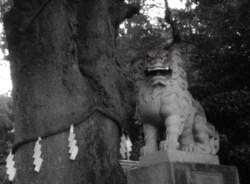 比々多神社(伊勢原市)
