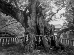 瀬戸内海に浮かぶ大三島の大山祇神社。