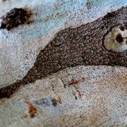 Abstract tree 2