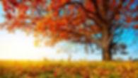 fall-tree-300x169.jpg