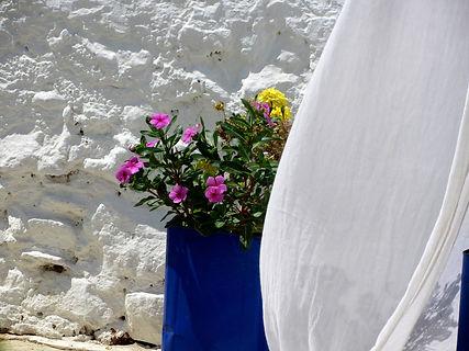 Σκόπελος Αιγαιοπελαγίτικη ομορφιά λευκό και μπλε