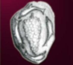 Σκόπελος ιστορία νόμισμα δελφίνια Σταφύλι