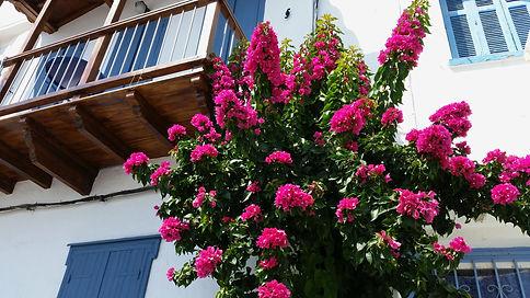 Greece Skopelos picturesque Chora