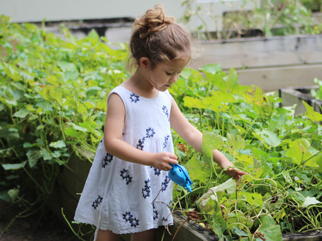 Organic Gardening as Part of Your Sustainable Living