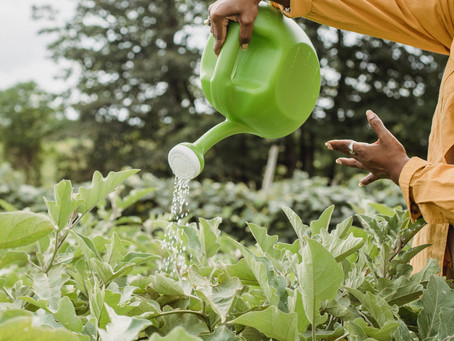 8 Ways to Be More Green in Your Garden