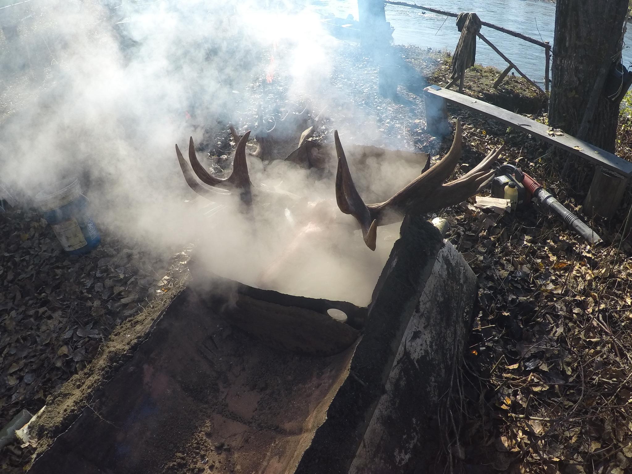 Boiling skulls