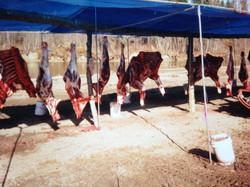 moose meat
