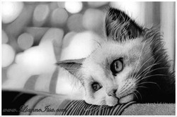 A kittens life